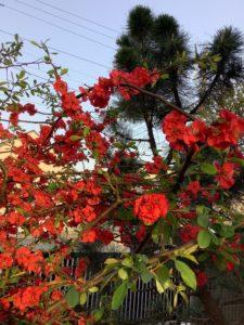 春のお花が見事に咲き誇っています。